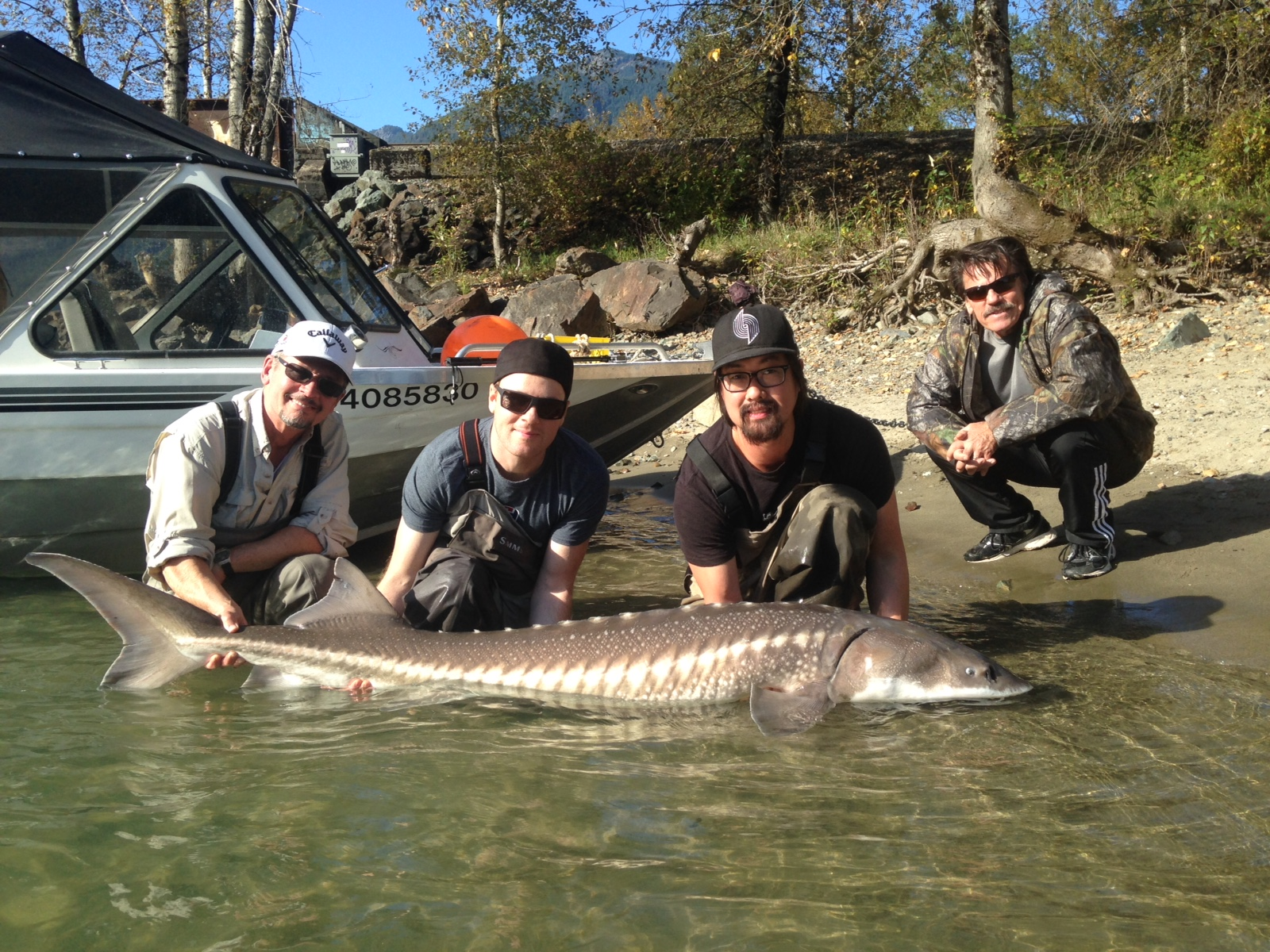 Harrison River - Sturgeon