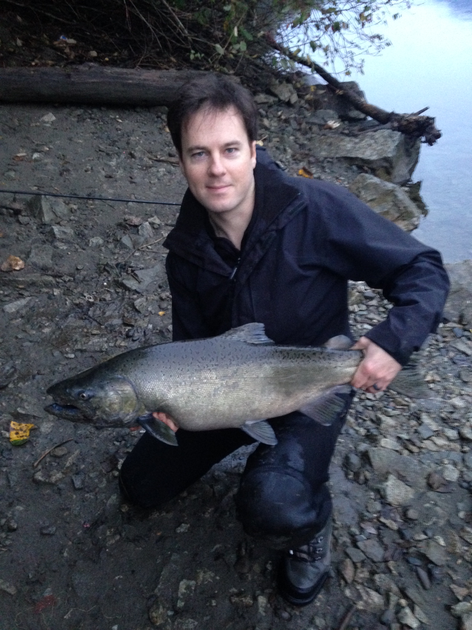 Chilliwack River - Chinook Salmon