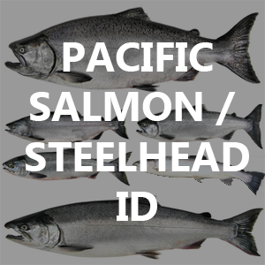 Pacific Salmon / Steelhead Identification and Lifecycle