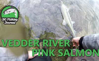 Vedder River Salmon Fishing in late September