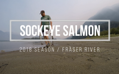 Fishing Sockeye Salmon in the Fraser River