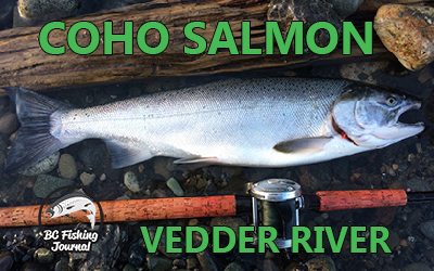 Fishing for Early Fall Vedder River Coho Salmon