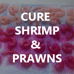 Easy Shrimp Cure for Steelhead and Salmon