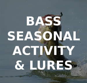 Bass Seasonal Feeding Times, Best Lures & Rigs
