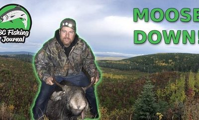 Moose Hunting in BC Cariboo Area – Bull Down!