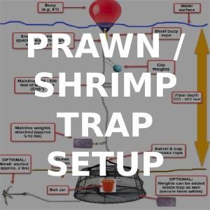 How to Setup a Prawn Trap